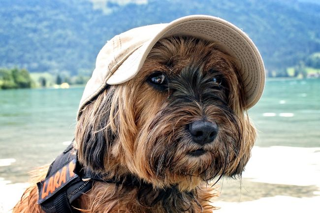 Cane con cappellino in spiaggia sul Lago