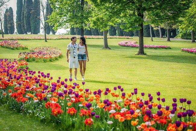 Fioritura di tulipani al Parco Giardino Sigurtà