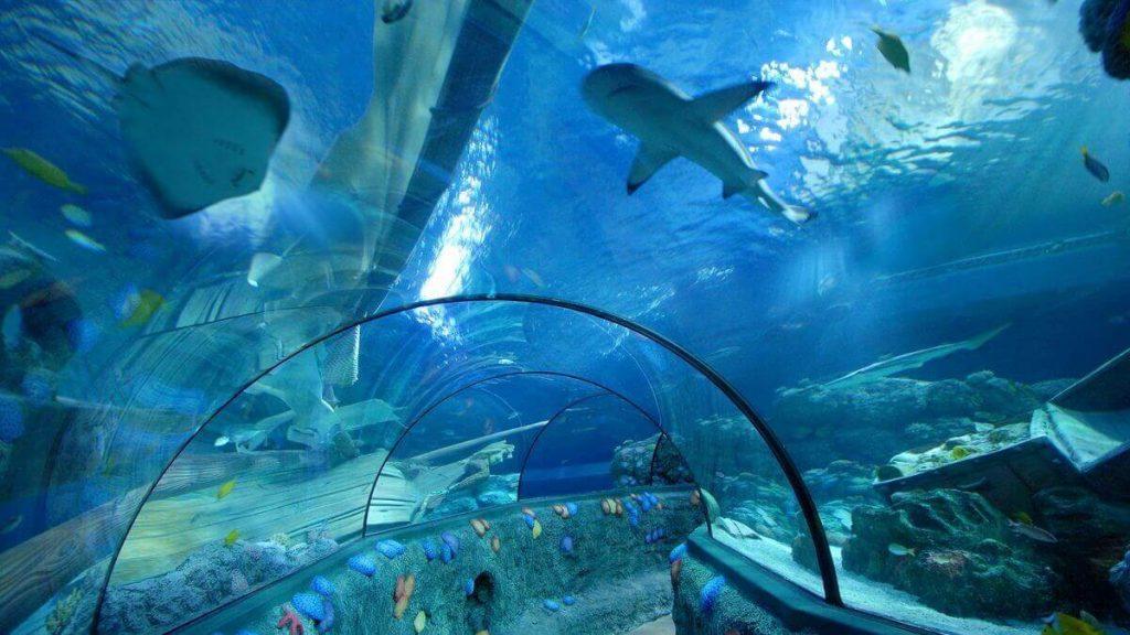 Tunnel oceanico del Gardaland Sea Life Aquarium